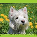 Заводить ли ребенку собаку? История дружбы и любви Дениса и Найды