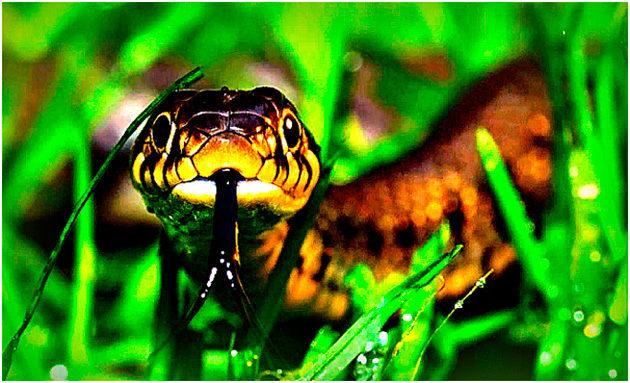 Первая помощь при укусе змеи — помощь в лесу и лечение. Что делать нельзя